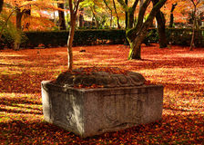 Japanese garden in Autumn, red and yellow leaves. Kyoto Japan. Royalty Free Stock Image