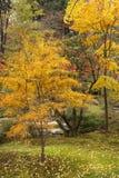 Japanese Garden During the Autumn Season. Royalty Free Stock Photo