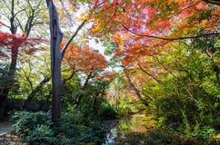 Japanese garden in autumn. Tokyo, Japan Royalty Free Stock Photography