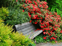 Japanese Garden Bench Flower Bushes Stock Photography
