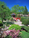 Japanese garden in Bloomington with blooming bush Stock Photos