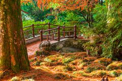 Japanese garden in Arboretum, Sochi, Russia. Japanese garden with bridge in Arboretum in sunny autumn day, Sochi, Russia Royalty Free Stock Photo