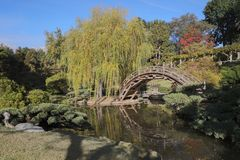Japanese Garden Bridge. A Japanese garden bridge arcs over a pond in a hillside garden at the Huntington Library gardens in Pasadena, California stock image