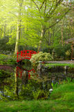Japanese garden with bridge Stock Photo