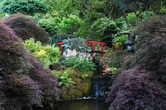 Butchart Japanese Garden Red arch bridge. The Japanese garden in the Butchart Gardens on Vancouver Island. Butchart Gardens is a group of floral display gardens royalty free stock photos