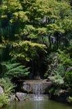 Japanese garden cascade. Cascade in a Japanese garden with plants Royalty Free Stock Photography