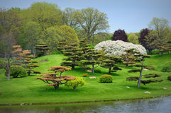 Japanese Garden. The Japanese Garden at the Chicago Botanical Gardens in Glencoe, IL Stock Photography