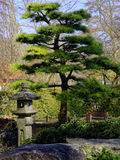 Japanese Garden detail. Cypress tree and a bird-house made of stone in a Japanese Garden of a botanical garden at spring Royalty Free Stock Photo