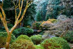 JAPANESE GARDEN. EARLY SNOW COOLING THE TREES Stock Images