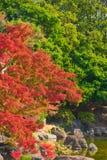 Japanese garden of Expo`70 commemorative park. Osaka, Japan - November 17, 2018: Japanese garden of Expo`70 commemorative park in autumn, shot in Osaka, Japan royalty free stock photos