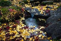 Japanese garden. Fall leaves in the Japanese garden in Lithia Park, Ashland, OR stock images