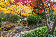 Japanese garden in fall. Vibrant colors in autumn in Japanese garden, Lithia park in Ashland, Oregon royalty free stock photo