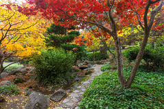 Japanese garden in fall. Vibrant colors in autumn in Japanese garden, Lithia park in Ashland, Oregon royalty free stock images