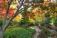 Japanese garden in fall. Vibrant colors in autumn in Japanese garden, Lithia park in Ashland, Oregon stock image