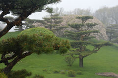 Japanese Garden Fog. Japanese Garden in fog and mist with spring blossoms in the background at the Chicago Botanic Gardens in Glencoe, Illinois Stock Photos