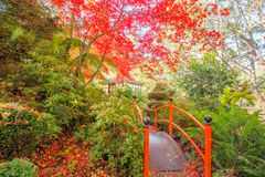 Japanese garden with footbridge and gazebo in Autumn Stock Images