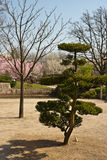 Japanese garden, Hasselt, Belgium Stock Images