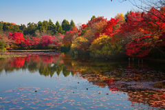 Japanese garden in Kyoto Royalty Free Stock Image