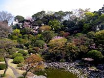 Japanese garden and lake in tokyo Royalty Free Stock Photography