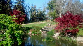 Japanese Garden and Lake. This is the lake and garden at Woodward Park in Fresno, CA Stock Photos