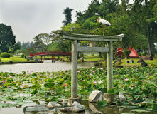 Japanese garden landscape Stock Images