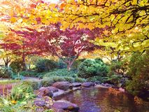 JAPANESE GARDEN IN LITHIA PARK WITH COLORED FALL LEAVES. The fall colors were gorgeous on this day, There are paved pathways throughout the park with the colored stock photo