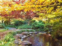 JAPANESE GARDEN IN LITHIA PARK IN THE FALL. The colors in this park in the fall are almost unbelievable. They are so bright and beautiful. There are wonderful royalty free stock photo
