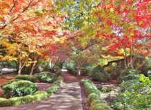 JAPANESE GARDEN IN LITHIA PARK WITH FALL FOLIAGE. The fall colors were gorgeous on this day, There are paved pathways throughout the park with the colored trees stock photography