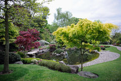 Japanese garden, with maple trees and pond. On an overcast day Royalty Free Stock Photo