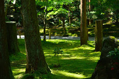 Moss covered Japanese garden, Kyoto Japan. Royalty Free Stock Photos