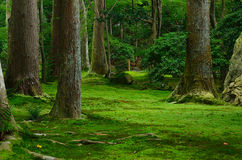 Japanese garden, moss and trees, Kyoto Japan. Royalty Free Stock Photography