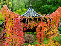Pagoda Draped with Vines. The golds, yellows and reds of the vines looks like a drapery ready to open up and reveal the hidden Japanese pagoda Royalty Free Stock Images