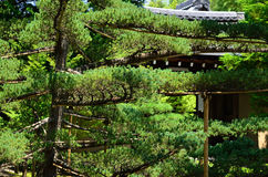 Japanese garden and pine tree, Kyoto Japan Stock Photos