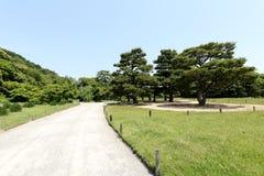 Japanese garden with pine trees Stock Photos