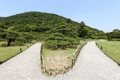 Japanese garden with pine trees Stock Images