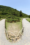 Japanese garden with pine trees Stock Photography