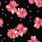 Japanese garden pink blooming sakura or cherry blossom flowers. Vector seamless pattern. Illustration for fabrics,and all prints. On black background color vector illustration