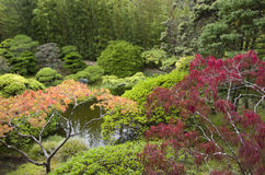 Japanese garden plants royalty free stock photo