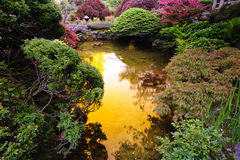 Japanese garden pond Royalty Free Stock Photography
