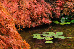 Japanese garden pond Stock Image