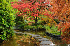 Japanese garden pond Stock Photos