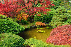 Japanese garden pond Royalty Free Stock Images