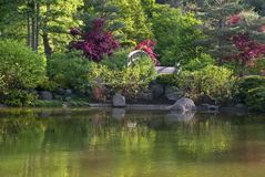 Japanese garden pond Stock Photo