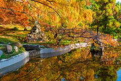 Japanese garden in Arboretum, Sochi, Russia. Japanese garden with pond in Arboretum in sunny autumn day, Sochi, Russia Royalty Free Stock Photography