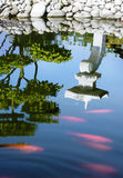 Japanese garden pond surface Stock Photo