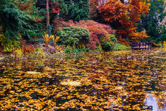 Japanese garden with pond Royalty Free Stock Image