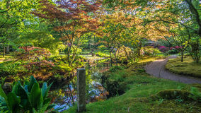 Japanese garden pond lined with bright colored branches and sunny spots. Japanese garden pond lined with bright purple and pink branches, bright sun rays and Stock Image