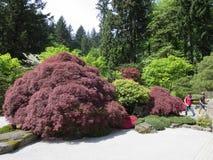 Japanese garden Portland Royalty Free Stock Photo