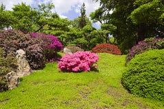 Japanese garden in Prague. Flowers in a Japanese garden in Prague Stock Images