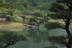 Japanese Garden with Red Bridge. Japanese garden with a pond, red bridge, ornamental pine trees and turtles on the bank Stock Image